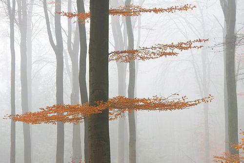 Nebel im Herbstwald von Barbara Brolsma