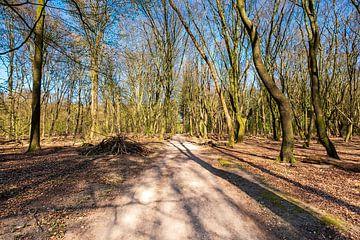 Bospad in het Speulderbos van Evert Jan Luchies