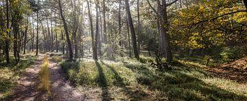 Sonnenstrahlen von Marcel Pietersen