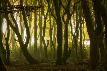 Spooky bos van Dennisart Fotografie