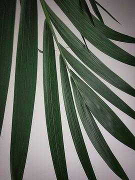 Blatt Areca Pflanze von Tuur Wouters