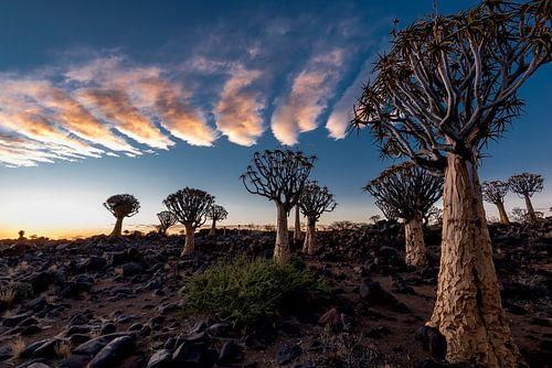 Kokerbomen (Quiver Tree Forest) von Jeroen Kleverwal