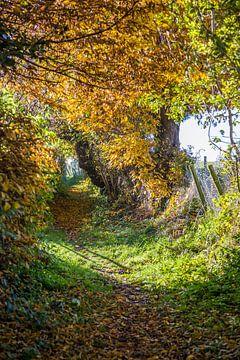 Zonnige herfstkleuren  von Peter van Rooij