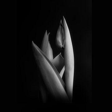 Een glimp #004 van Peter Baak