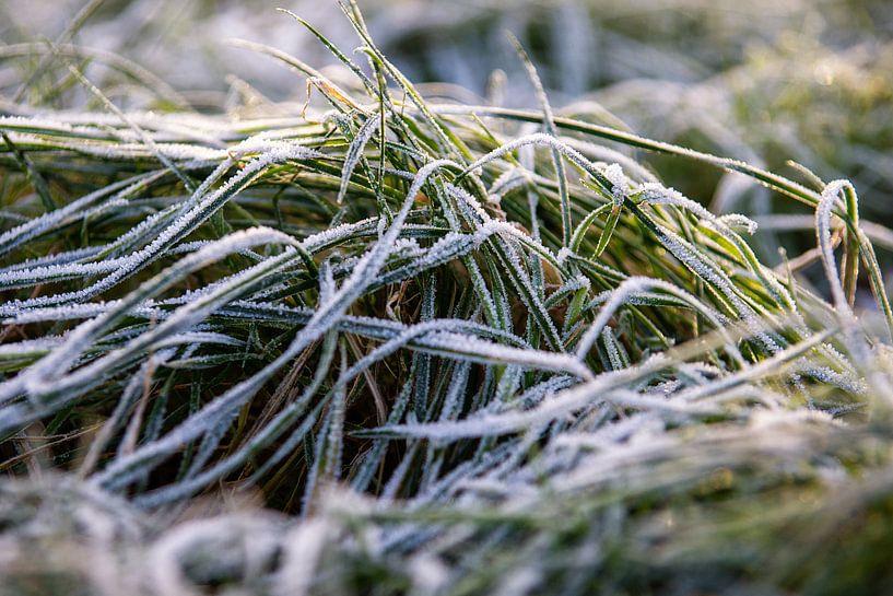 Bevroren gras van Jan van Broekhoven