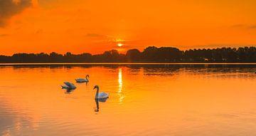 Zwanen bij zonsopkomst van Henk van den Brink