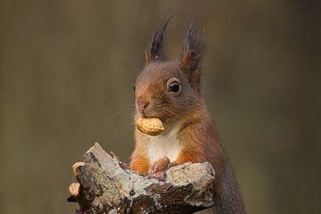 Van mij? denkt de eekhoorn... van Carola van Tilburg