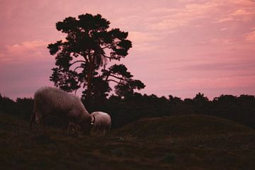 Zonsondergang na een stormachtige dag van Steven Marinus