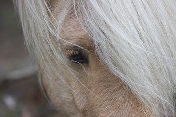 Wild paard op de Hoge Veluwe von Jeanine Verbraak