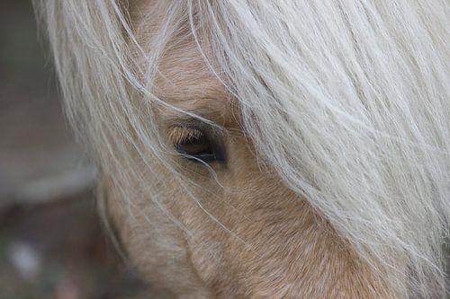Wild paard op de Hoge Veluwe van