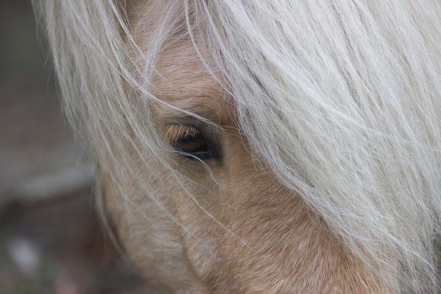 Wild paard op de Hoge Veluwe van Jeanine Verbraak