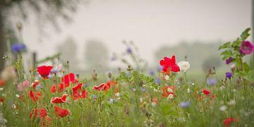 Fleurige berm von Sybren Visser