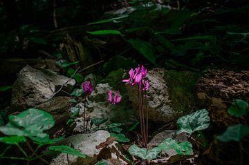 kleine Blume von Branca Verheul