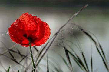 Zomaar een wilde bloem