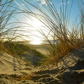 Dünen und Meer von Claudia Evans