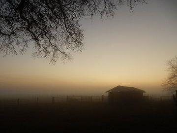 Stal in de mist van Joke te Grotenhuis