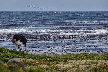 Kaap de Goede Hoop, Zuid Afrika van Tilly Meijer