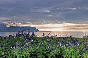 IJsland, Middernachtzon, Pórshofn  sur Yvonne Balvers