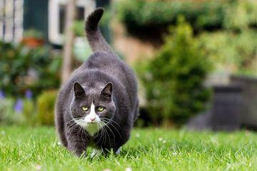 Dikke kat on the move van Dennis van de Water