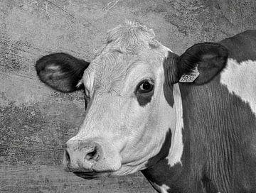 Porträt Kuh in schwarz-weiß von Marjolein van Middelkoop