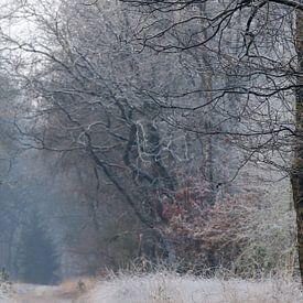 Bevroren bos van Evert Jan Kip
