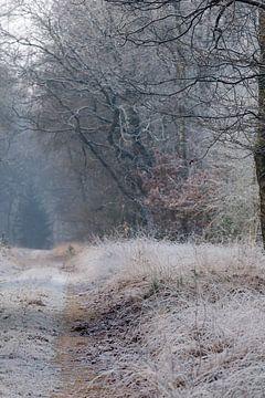 Bevroren bos von Evert Jan Kip