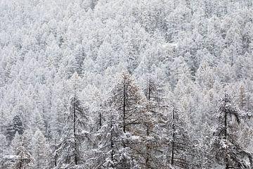 schneebedeckte Bäume von Mark Thurman