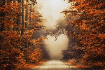 Herz auf dem Herbstweg von Lars van de Goor
