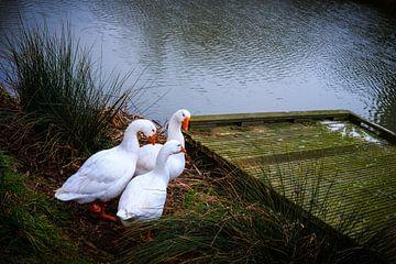Waterside van Jan Bakker