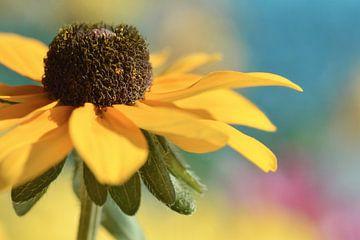 Sonnenhut von Violetta Honkisz