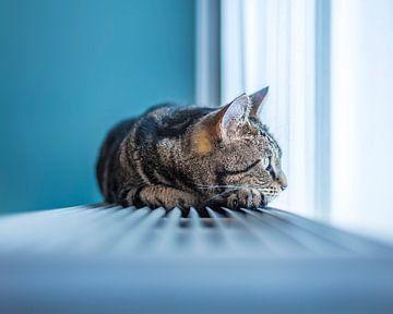 Relaxte Kat van
