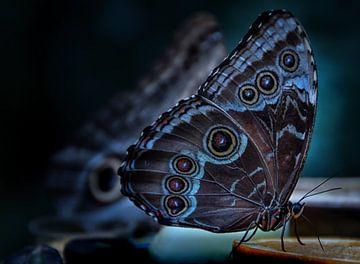 vlinder van Marieke Bakker