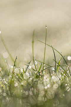 Tau auf den Grashalmen am Morgen, wirkt ein wenig neblig von KB Design & Photography (Karen Brouwer)