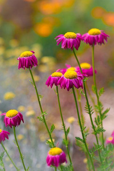 Vrolijke zomerbloemen van Lily Ploeg