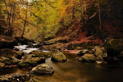 Rivier in bos met herfstsfeer van