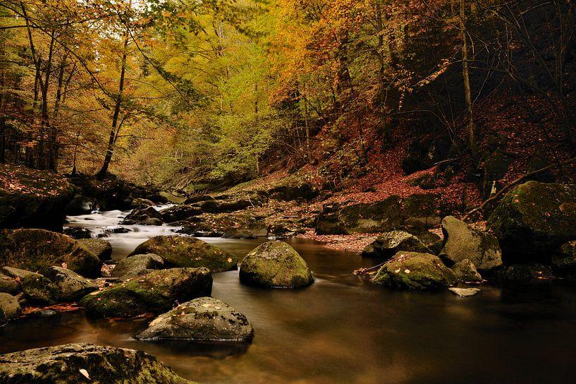 Rivier in bos met herfstsfeer van Gonnie van de Schans