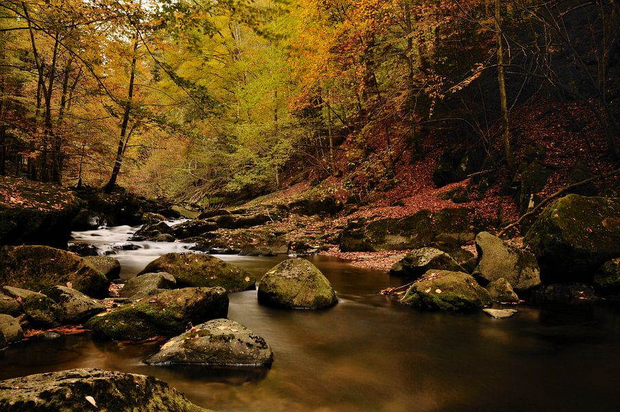 Rivier in bos met herfstsfeer