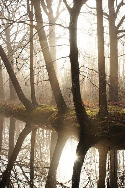 bomen in de mist van Dirk van Egmond
