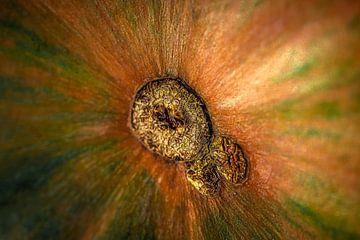 UFO: Nicht identifiziertes Flora-Objekt von HvNunenfoto