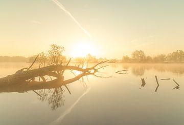 Boom in het water bij mistige zonsopkomst van Marcel Kerdijk