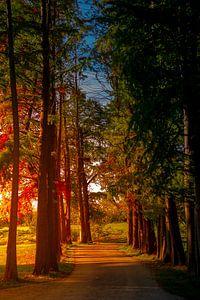 ochtendzon langs de bomenrij