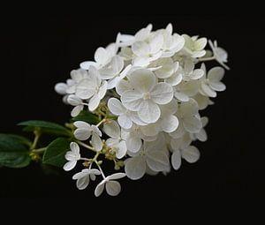 Vanille-Fraise von Anne Seltmann