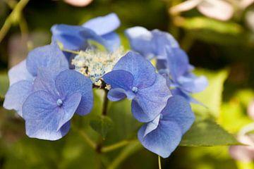 Blauwe bloem von Ron Pool