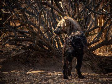 hyena pup van inge drenth
