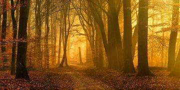 Het begin van een zonnige dag in het Speulderbos (XXL formaat)