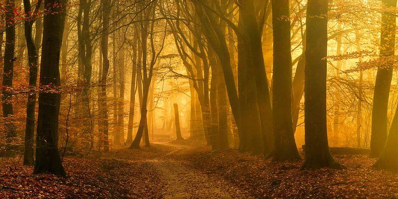 Het begin van een zonnige dag in het Speulderbos (XXL formaat) van Rigo Meens