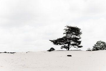 Lonely von Wilco Schippers