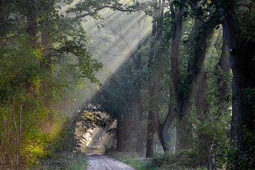 herfstmorgen in het bos van ina van zandwijk
