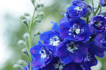 Summer blue sur Carla Mesken-Dijkhoff