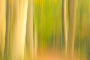 bomen van Arjan Keers